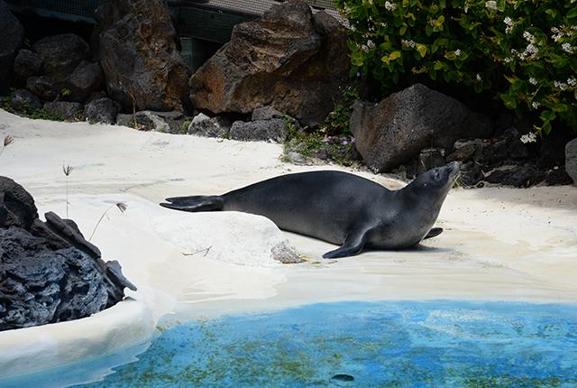 夏威夷海洋公园海豚邂逅